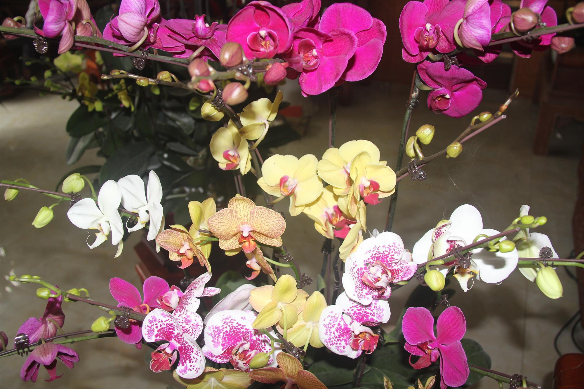 Bắc Ninh chuẩn bị nguồn cung ứng hoa trong dịp Tết