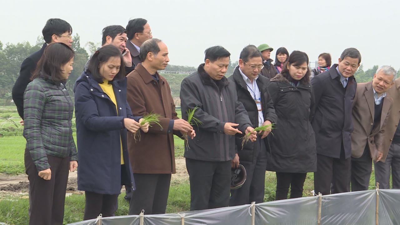 Bí thư Tỉnh ủy Nguyễn Nhân Chiến kiểm tra sản xuất tại huyện Yên Phong
