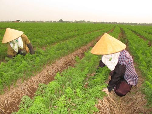 Năm 2020, Bắc Ninh phấn đấu xác lập quyền sở hữu trí tuệ cho 11 sản phẩm nông nghiệp, làng nghề Bắc Ninh