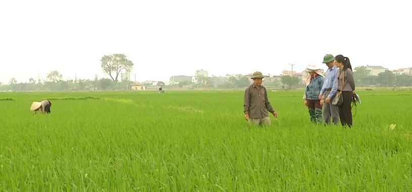 Đồng hành cùng nông dân: Chuyên mục của nhà nông trên sóng BTV