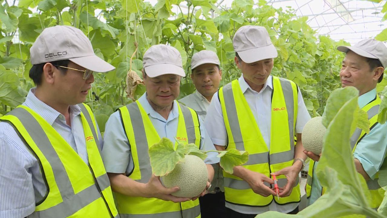 Chủ tịch UBND tỉnh thăm trang trại thông minh tại Thuận Thành