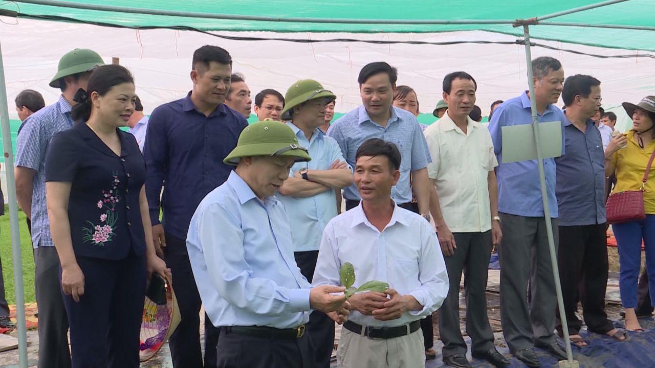 Lãnh đạo tỉnh thăm mô hình nông dân sản xuất kinh doanh giỏi