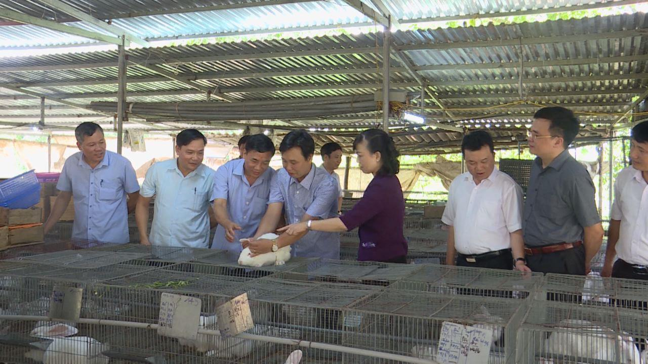 Lãnh đạo tỉnh thăm mô hình nông dân tiêu biểu