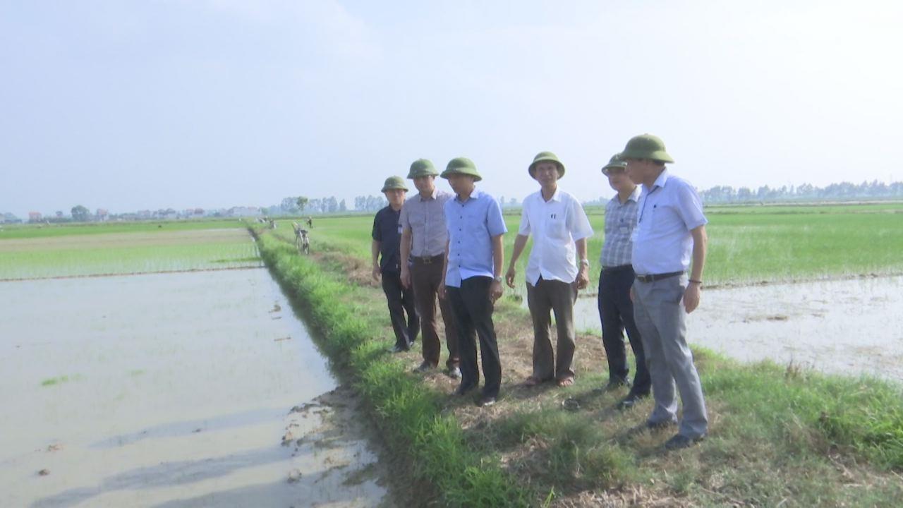 Phó Chủ tịch UBND tỉnh Nguyễn Hữu Thành  kiểm tra công tác tiêu úng khu vực Nam Đuống