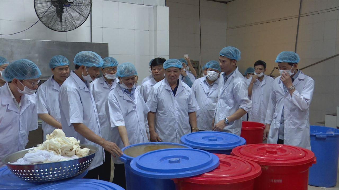 Chủ tịch UBND tỉnh thăm một số mô hình sản xuất tại Thuận Thành, Gia Bình