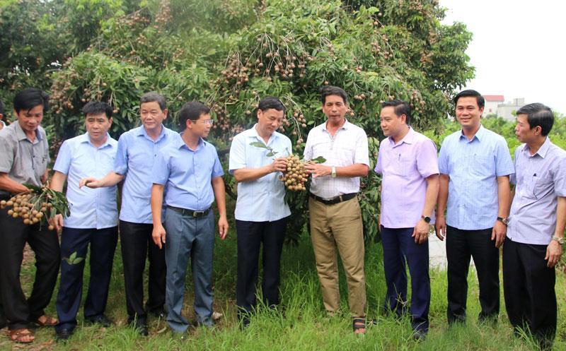 Phó Bí thư Thường trực Tỉnh ủy Nguyễn Hữu Quất thăm một số mô hình trang trại tiêu biểu
