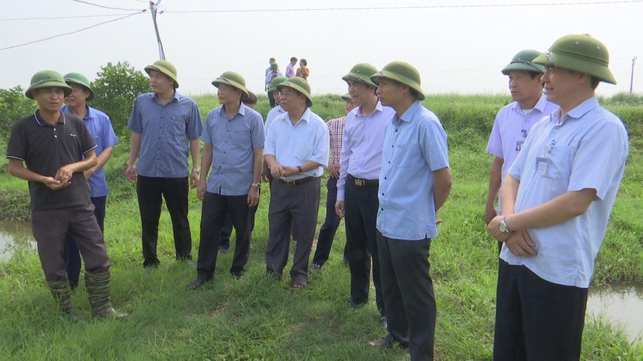Phó Chủ tịch UBND tỉnh kiểm tra sản xuất nông nghiệp tại Lương Tài