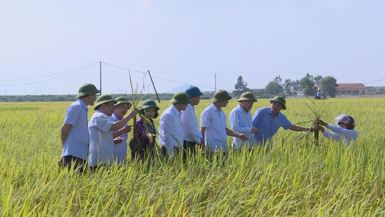 Bí thư Tỉnh ủy kiểm tra sản xuất nông nghiệp và xây dựng nông thôn mới tại Quế Võ