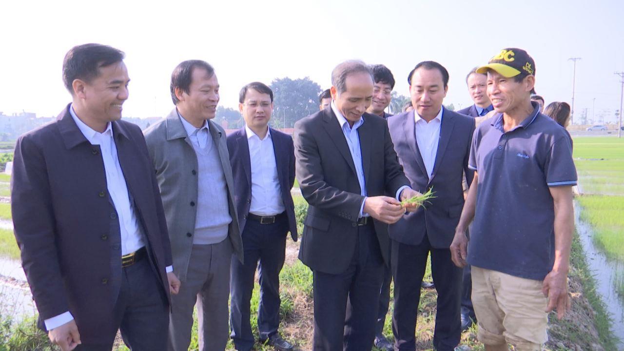 Phó Chủ tịch UBND tỉnh Nguyễn Hữu Thành thăm, kiểm tra sản xuất nông nghiệp đầu năm
