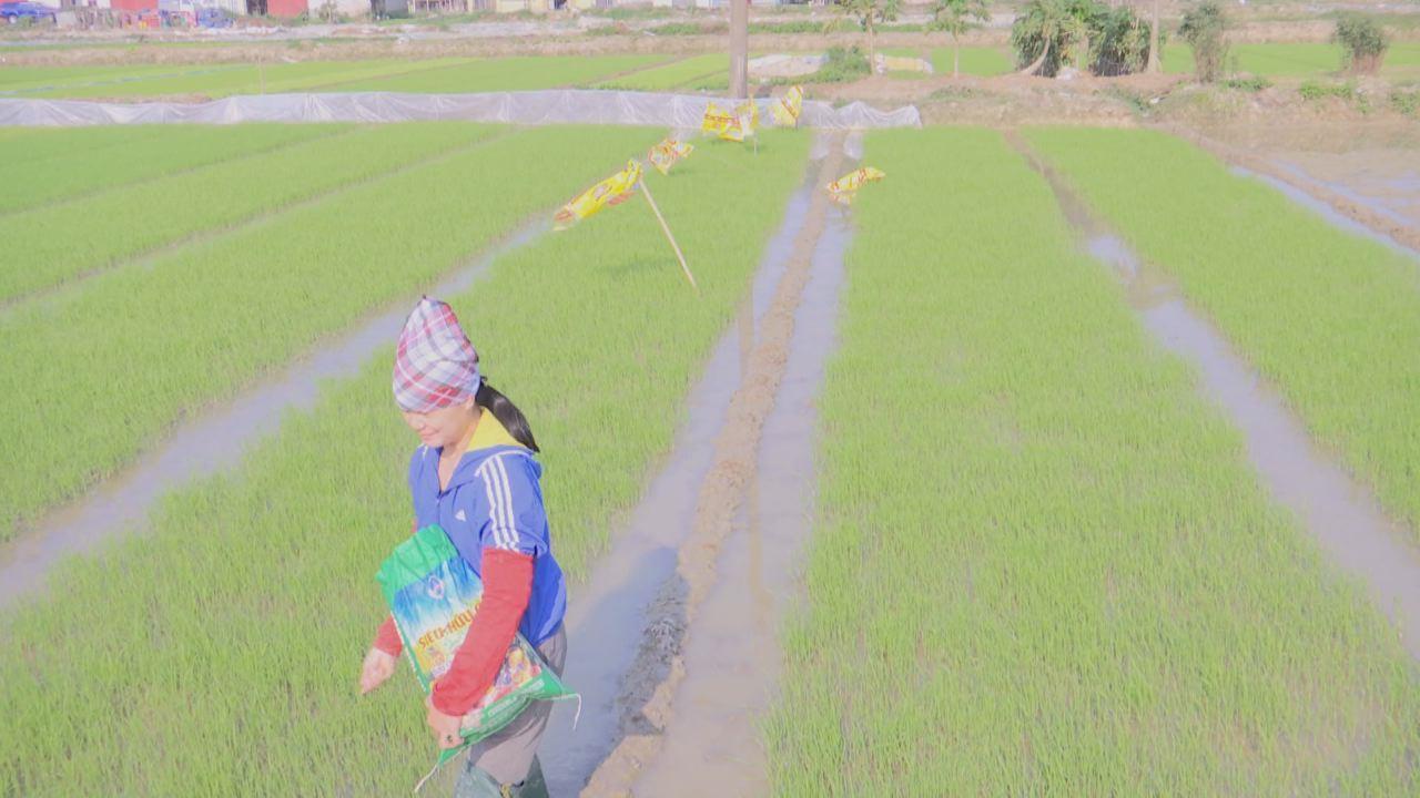 Tiên Du khắc phục thời tiết rét đậm, đảm bảo sản xuất vụ xuân