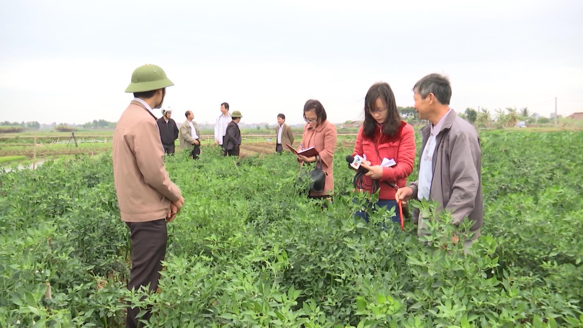 Liên kết- Hướng đi bền vững trong sản xuất nông nghiệp