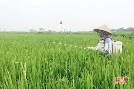 Tập trung phòng trừ bệnh đạo ôn cổ bông và sâu cuốn lá nhỏ lứa 2 hại lúa xuân 2020