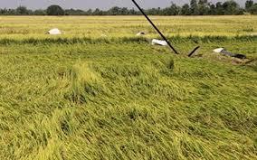 Lương Tài: Dông lốc, mưa đá gây thiệt hại hơn 500 ha lúa mùa