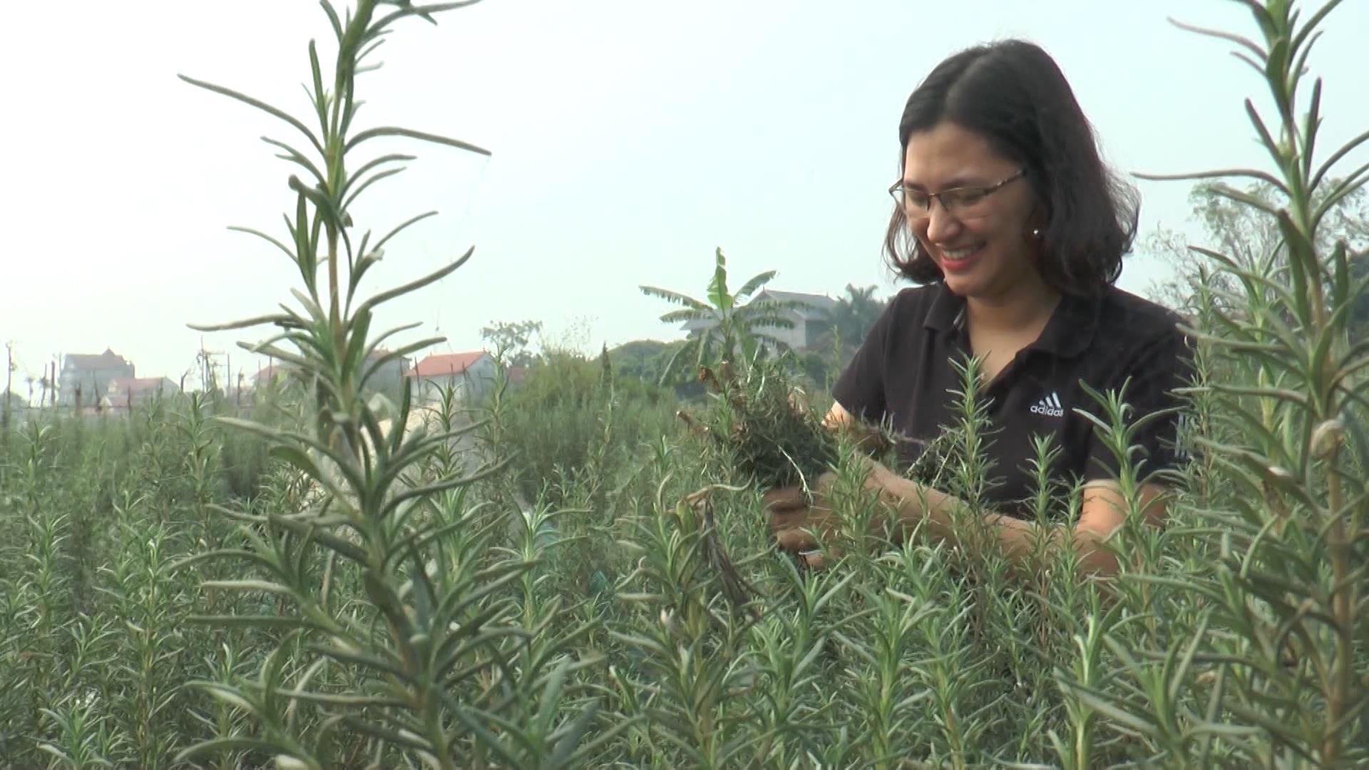 Đổi thay từ nông nghiệp công nghệ cao