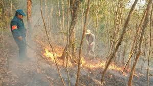 Cháy rừng phòng hộ tại huyện Tiên Du