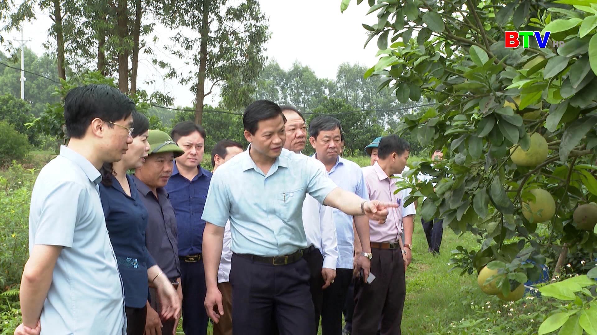 Phó Chủ tịch Thường trực UBND tỉnh thăm, khảo sát hoạt động trang trại