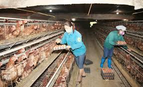 Tháo gỡ khó khăn cho phát triển kinh tế trang trại